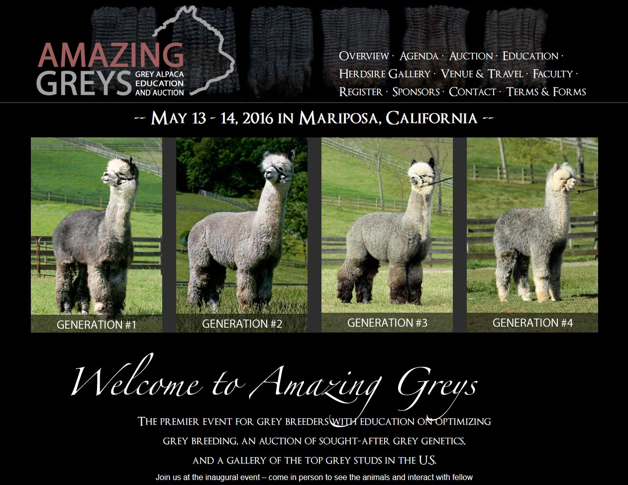 Amazing Greys Alpacas Auction
